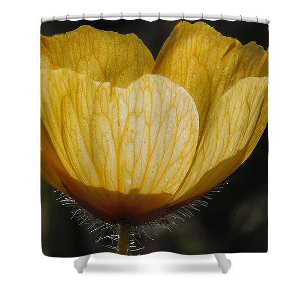 Yellow Flower 4 Shower Curtain