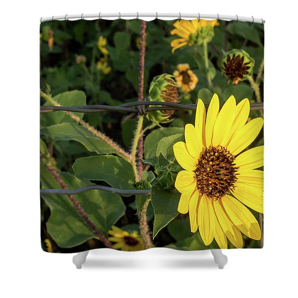 Yellow Flower Escaping From A Barb Wire Fence Shower Curtain