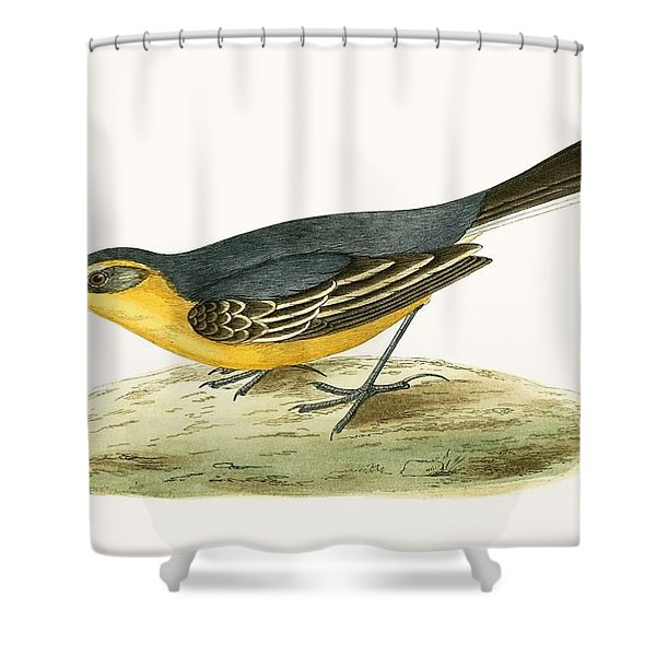 Yellow Headed Wagtail Shower Curtain