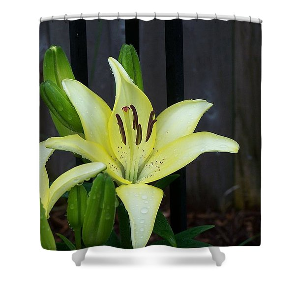 Yellow Lilly Shower Curtain