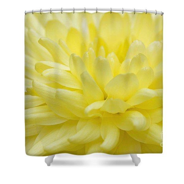 Yellow Mum Shower Curtain