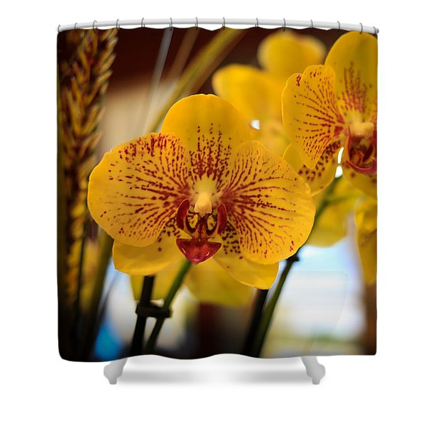 Yellow Orchis Shower Curtain