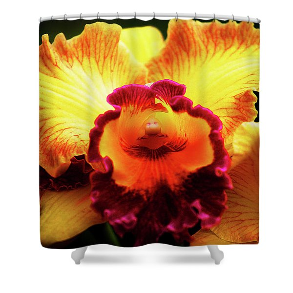 Yellow-purple Orchid Shower Curtain