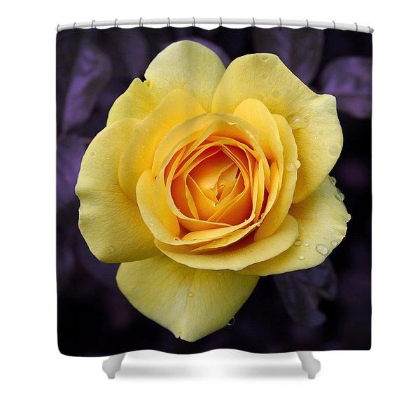 Yellow Rose Square Shower Curtain