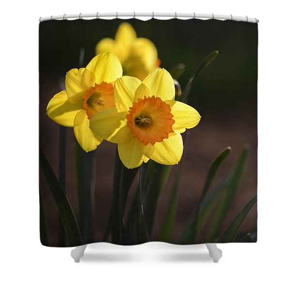 Shower Curtain featuring the photograph Yellow Spring Daffodils by Andrea Silies