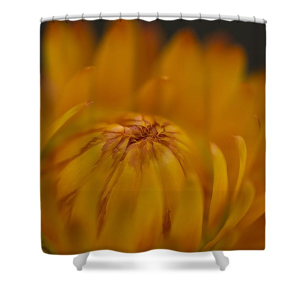 Yellow Strawflower Blossom Close-up Shower Curtain