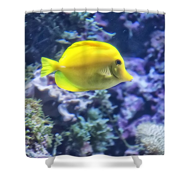 Yellow Tang Shower Curtain