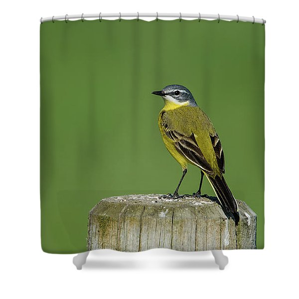 Yellow Wagtail Perching On The Roundpole Shower Curtain