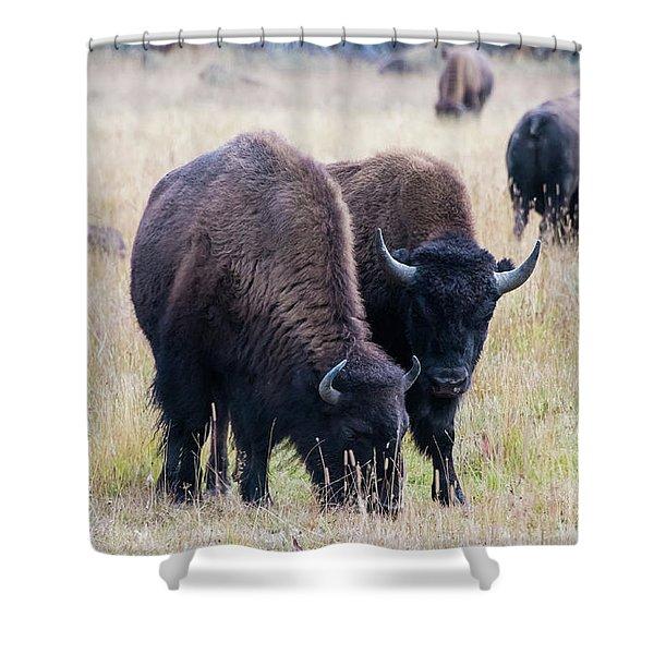 Yellowstone Bison Shower Curtain