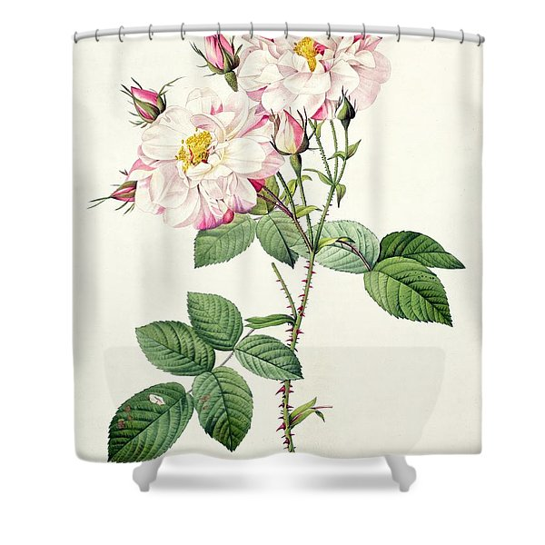York And Lancaster Rose Shower Curtain