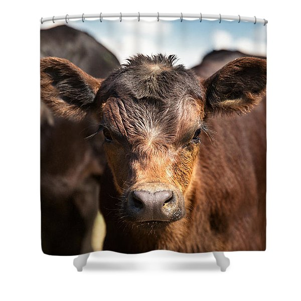 Young Angus Shower Curtain