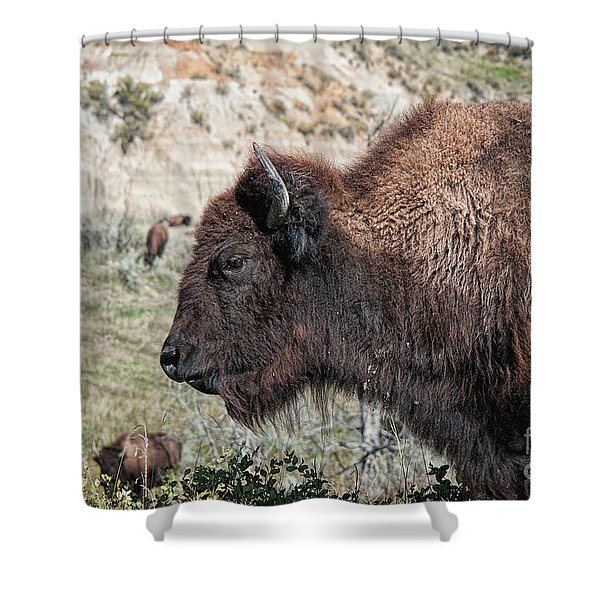 Young Bison Shower Curtain