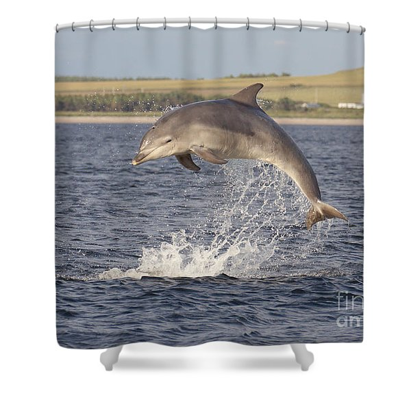 Young Bottlenose Dolphin - Scotland #13 Shower Curtain