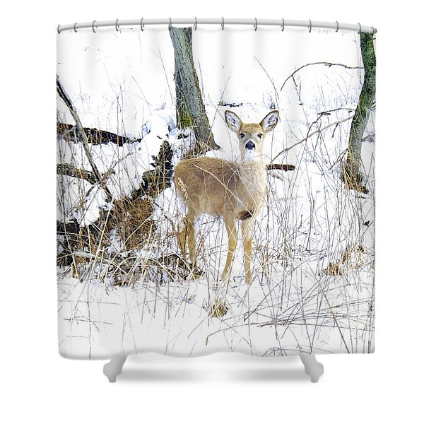 Young Doe And Spring Snow Shower Curtain