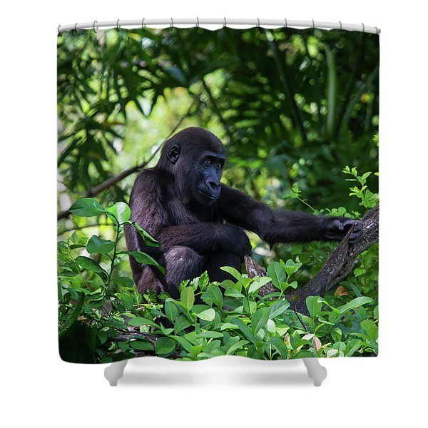 Young Gorilla Shower Curtain