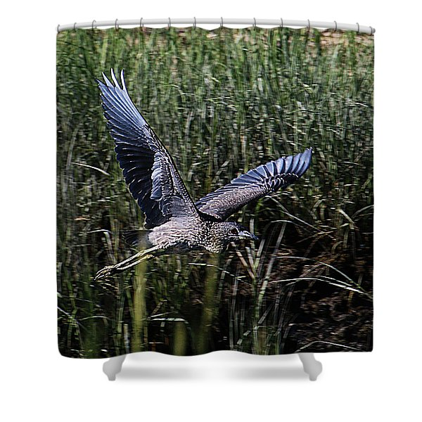 Shower Curtain featuring the photograph Young Heron Takes Flight by William Selander