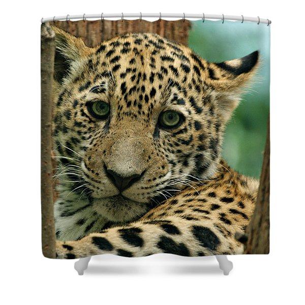 Young Jaguar Shower Curtain by Sandy Keeton
