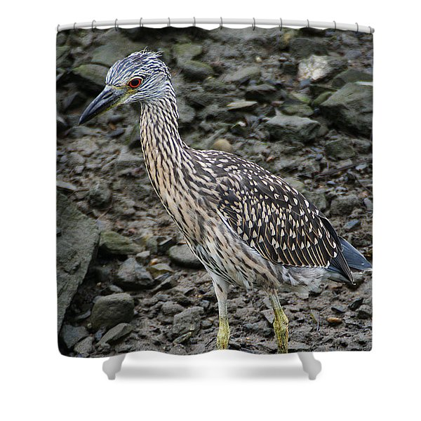 Shower Curtain featuring the photograph Young Night Heron by William Selander