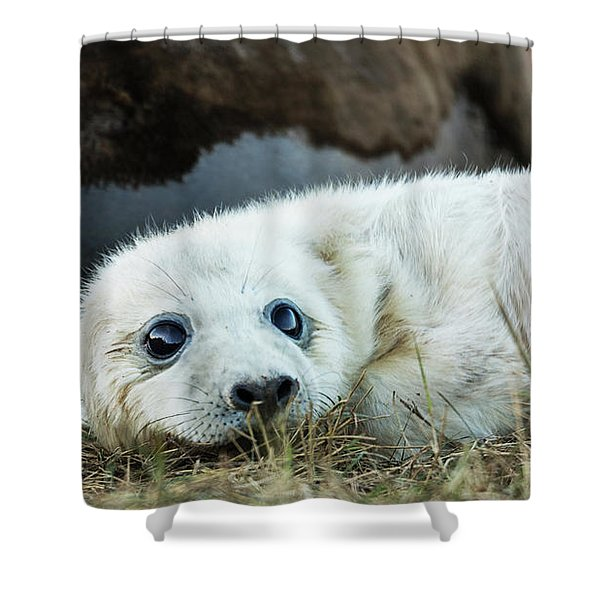 Young Pup Shower Curtain