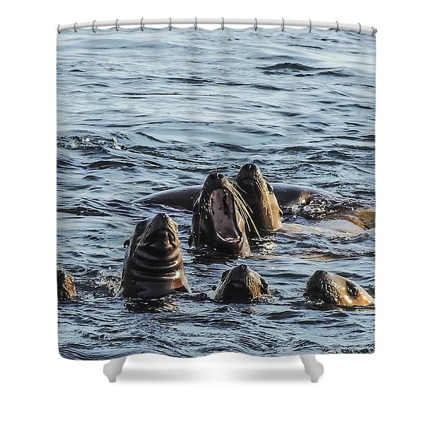 Young Sea Lions At Play Shower Curtain
