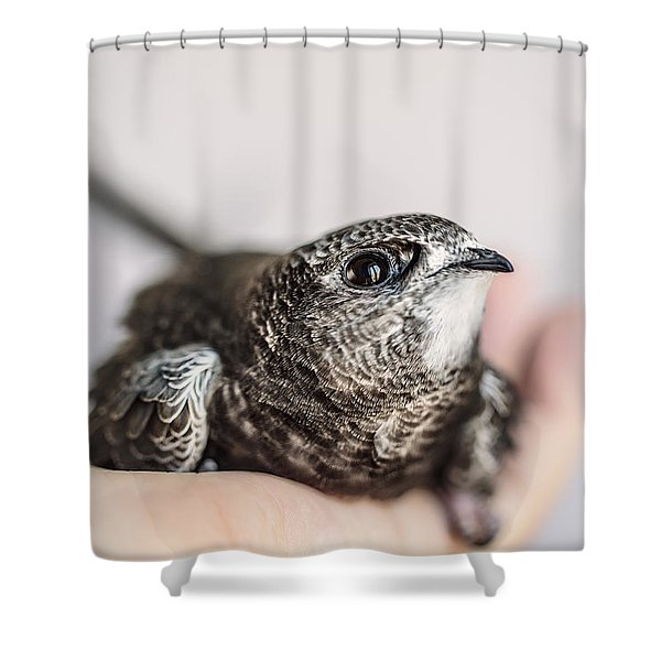 Young Swift Shower Curtain