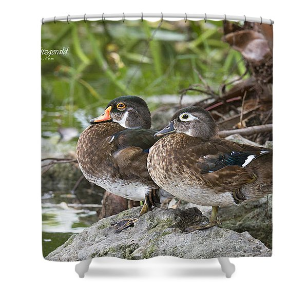 Young Wood Duck Pair Shower Curtain