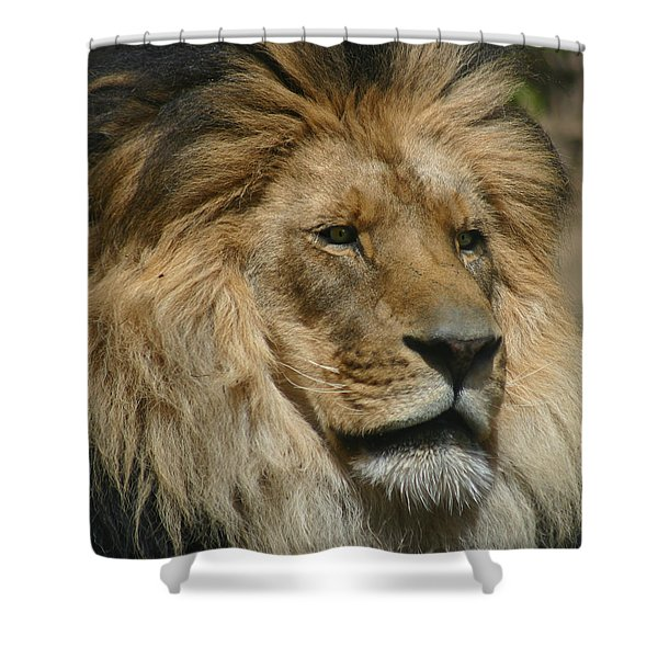 Your Majesty Shower Curtain