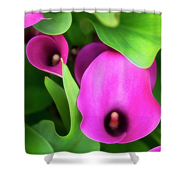 Zantedeschia Santa Fe Shower Curtain