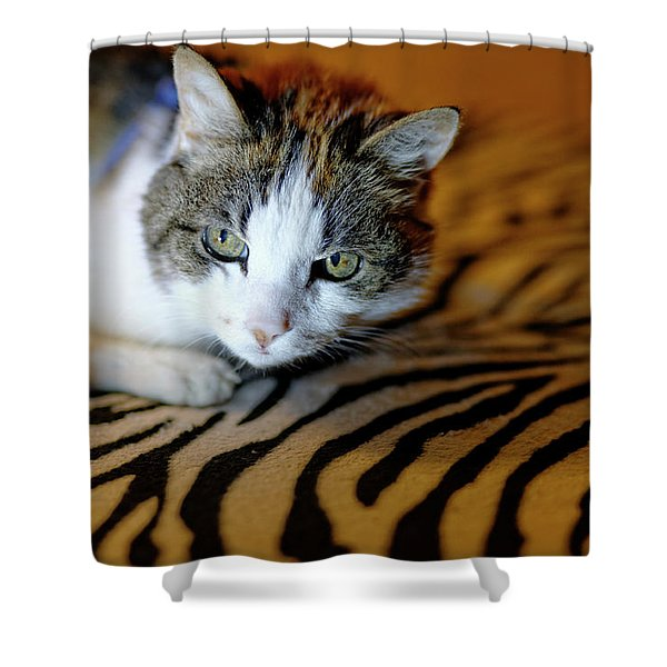 Zebra Cat Shower Curtain