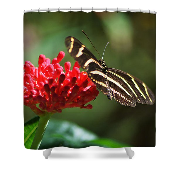 Zebra Heliconia Butterfly Shower Curtain