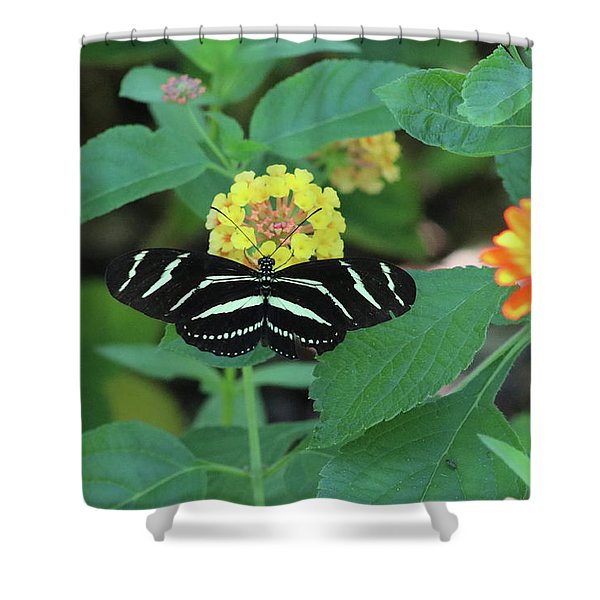 Zebra Longwing Butterfly Heliconius Charitonia Shower Curtain