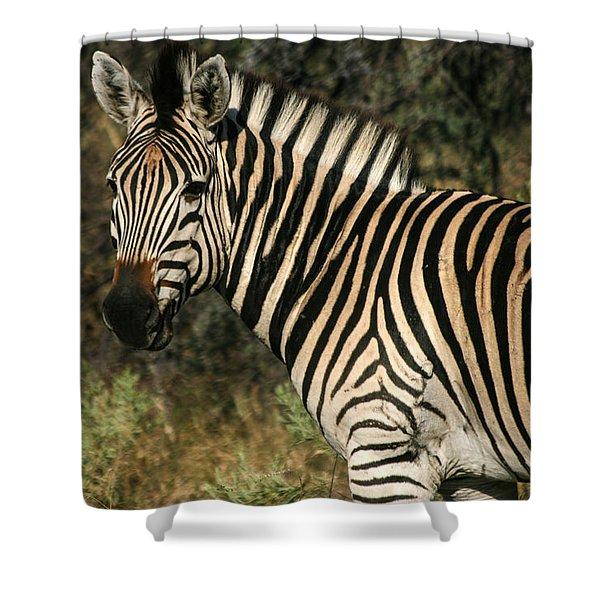 Zebra Watching Shower Curtain