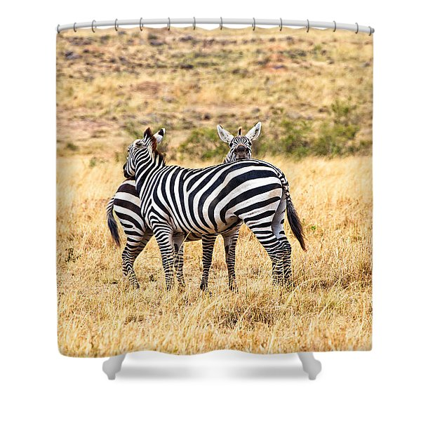 Shower Curtain featuring the photograph Zebras Resting In The Masai Mara by Perla Copernik