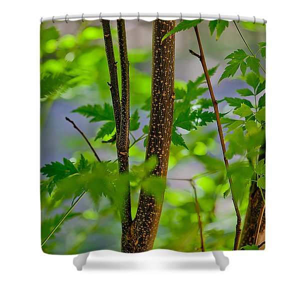 Zen Forest Shower Curtain