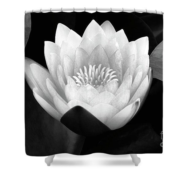 Waterlily Rising  Shower Curtain