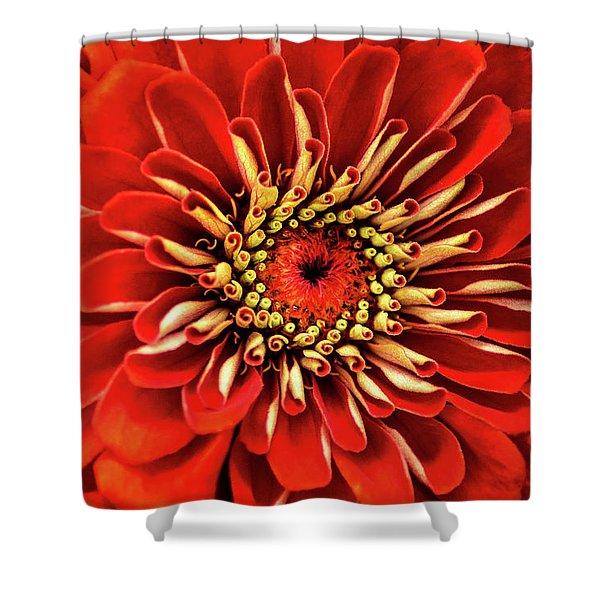 Zinnia-macro Shower Curtain