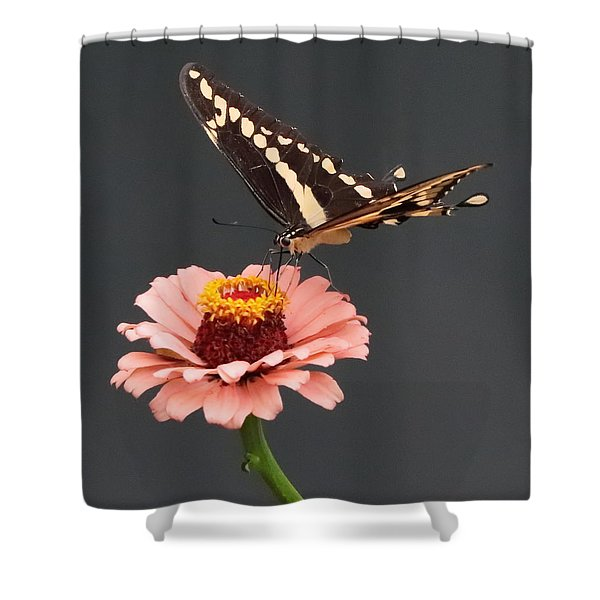 Zinnia With Butterfly 2702 Shower Curtain