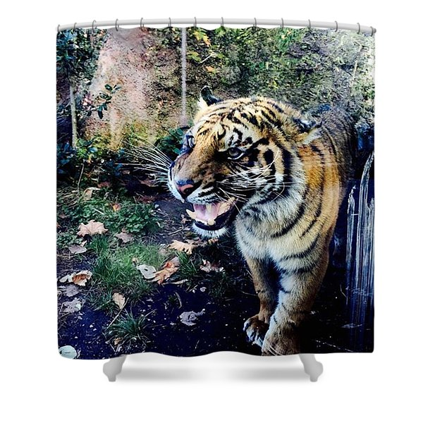 Tiger  Shower Curtain