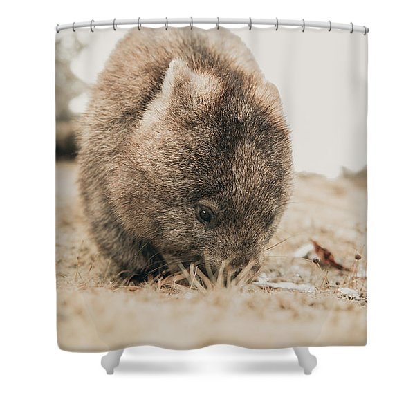 Shower Curtain featuring the photograph Adorable Large Wombat During The Day Looking For Grass To Eat by Rob D Imagery