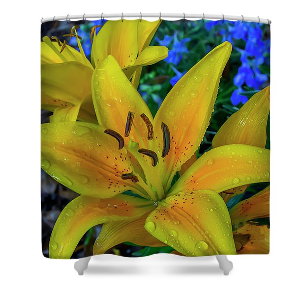 Asiatic Lily Shower Curtain