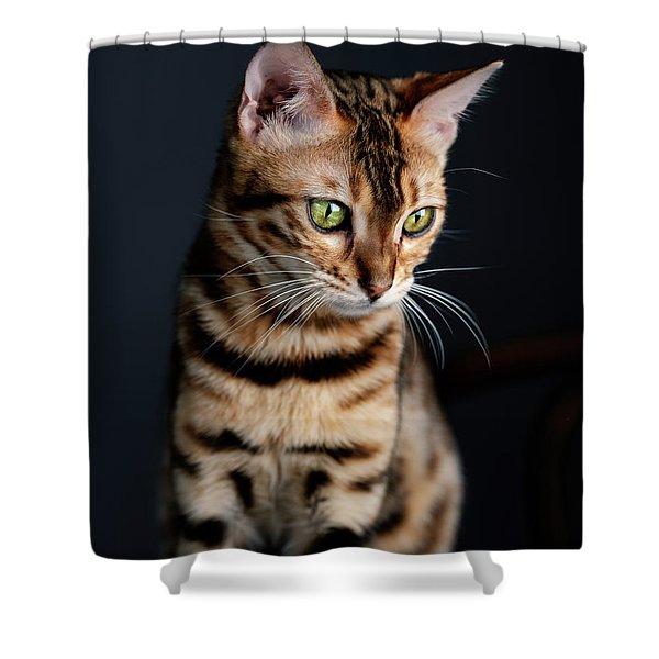 Bengal Cat Portrait Shower Curtain