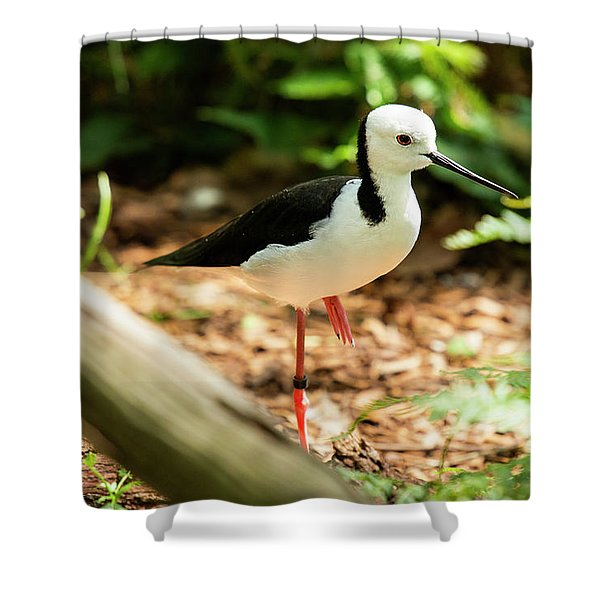 Shower Curtain featuring the photograph Black-winged Stilt by Rob D Imagery