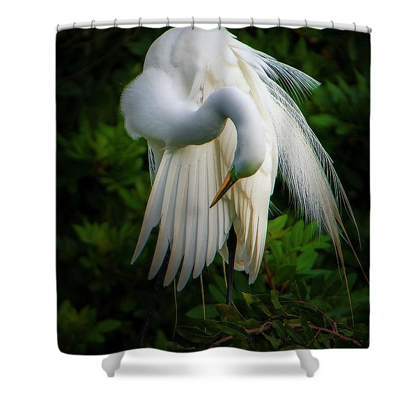 Breeding Plumage And Color Shower Curtain