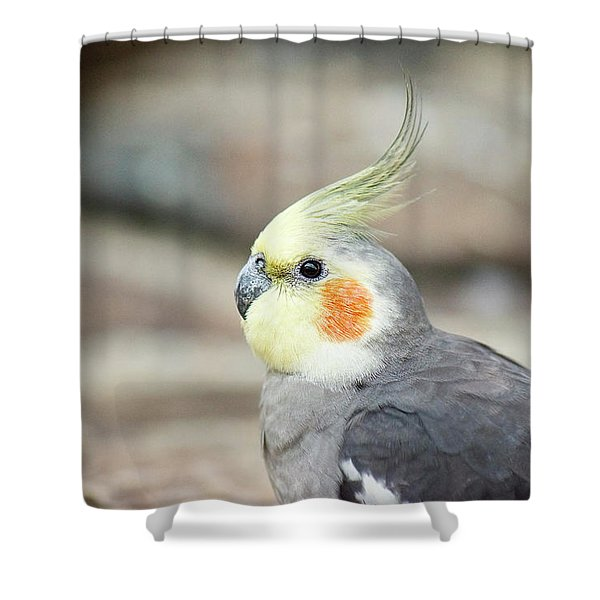 Shower Curtain featuring the photograph Close Up Of A Cockatiel by Rob D Imagery
