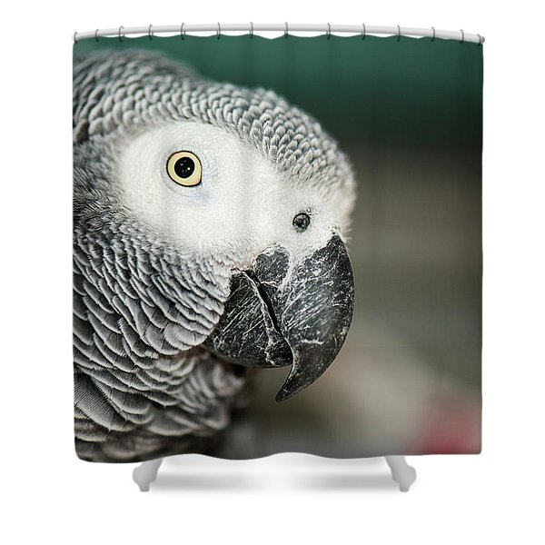 Close Up Of An African Grey Parrot Shower Curtain
