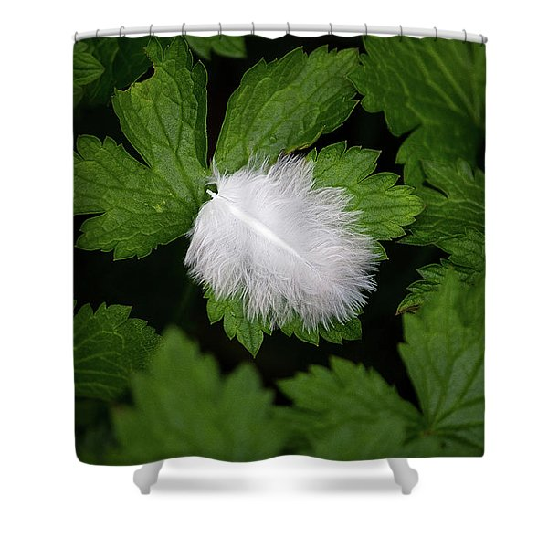 Colours. White Shower Curtain