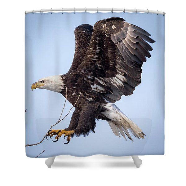 Eagle Coming In For A Landing Shower Curtain