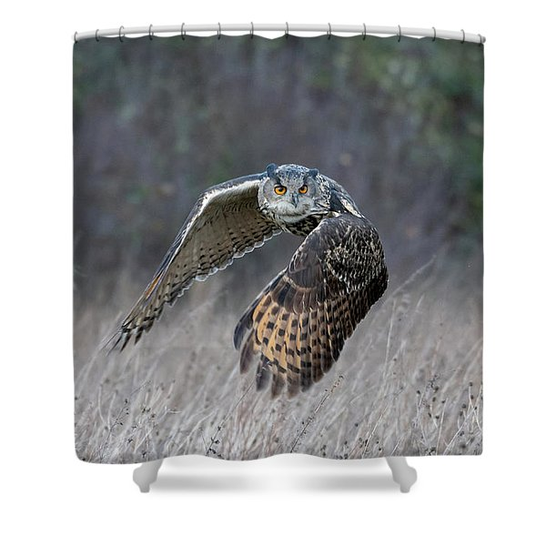 Eurasian Eagle Owl Flying Shower Curtain
