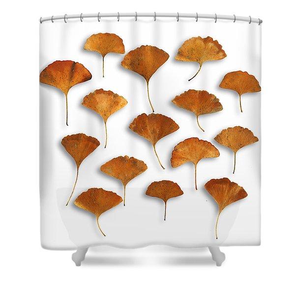 Gingkos Fall Shower Curtain