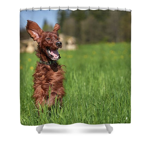 Happy Setter Shower Curtain